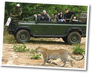 Following a leopard during a gamedrive